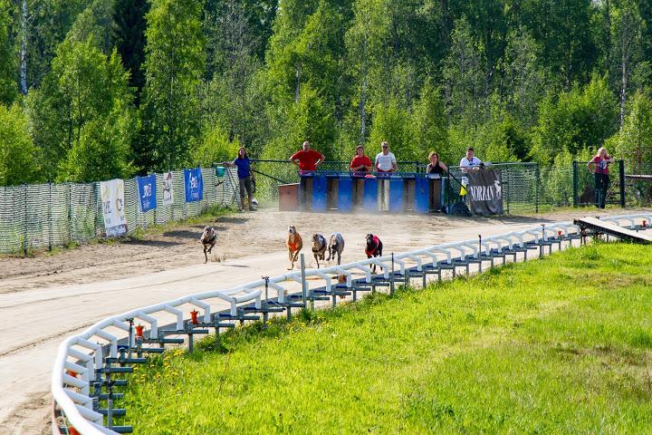 Skellefteå Greyhound Park