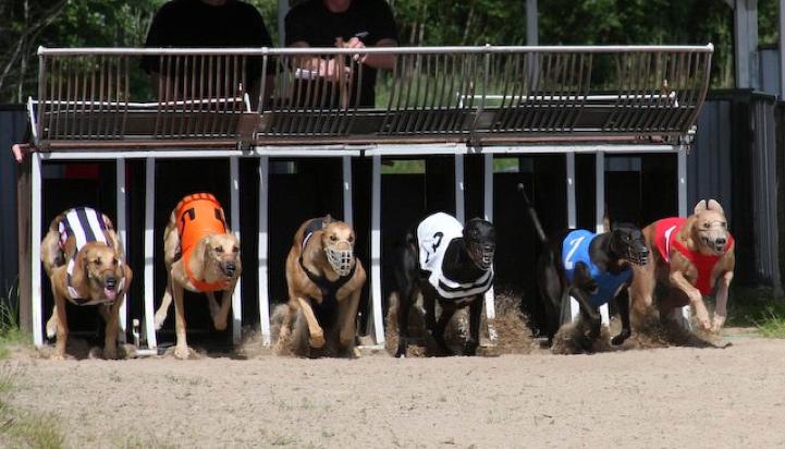 Göteborgs Hundkapplöpningsklubb